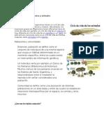 El Ciclo de Vida de Plantas y Animales