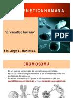 Citogenética Humana