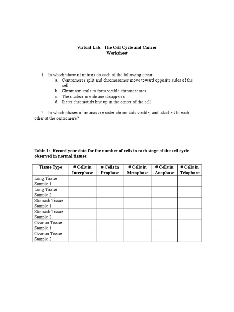 Uncategorized Phases Of Mitosis Worksheet the cell cycle and cancer worksheet doc mitosis cycle