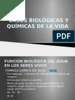 Bases Biológicas y Químicas de La Vida