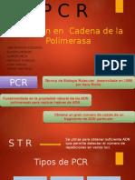 Técnica de PCR