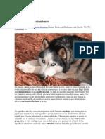 La artrosis canina.docx