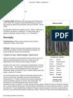 Bambu-chinês – Wikipédia, a enciclopédia livre