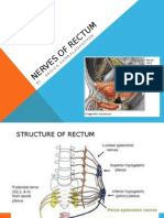 Nerves of Rectum