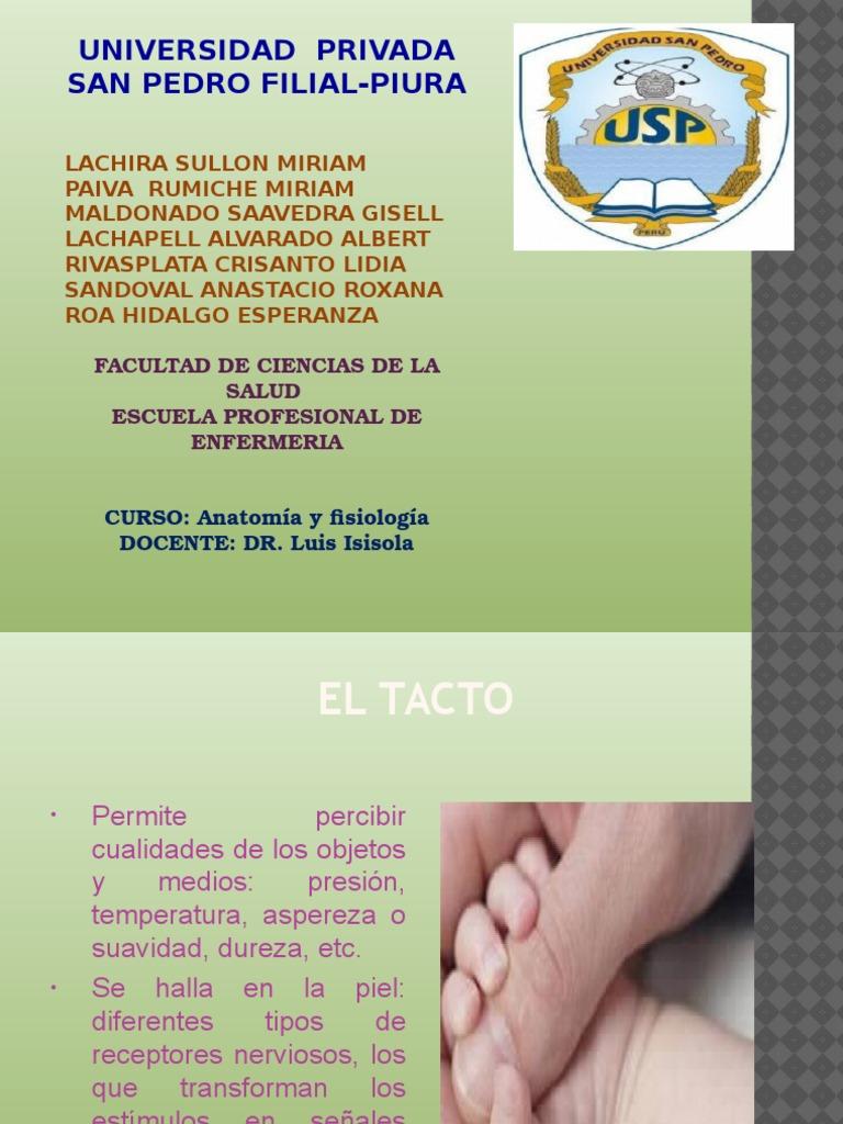 El Tacto -ANATOMIA