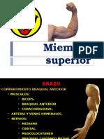 Miembro superior XXX.pptx