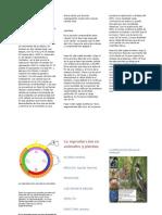 La Reproducción en Animales y Plantas