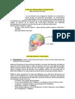 Anatomia de craneo