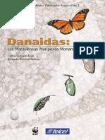Danaidas Maravillosas Mariposas Monarca