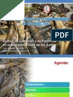 potencialdelcultivodecamaronesenlamancomunidaddelosandes-andahuaylas2013b-130425093134-phpapp02.pdf
