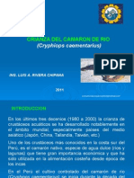 cultivodelcamaronnativo-131114173423-phpapp01.pptx