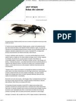 Toxina Produzida Por Vespa Brasileira Mata Células de Câncer - Notícias - Saúde