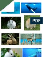 Animales Ballena Conejo Guemil
