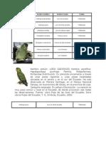 Descripción de las especies de loros