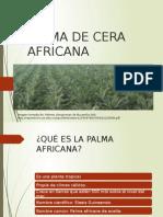 Palma de Cera Africana