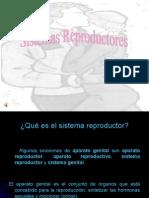 a4d3f_sistemareproductor5a8ciencias.ppt