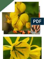 Flores Oriundas Del Perú