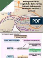 1 y 2-Neuro-Fisio. Del Nervio y Unión Mioneural