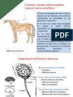 5 Y 6-Neuro-Sist. Nerv. Central y Autónomo