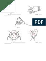 Anatomia Insecto - Cabeza