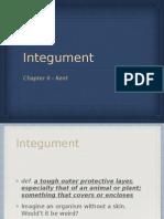 Integument