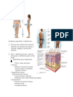 Anatomy Lab Objectives