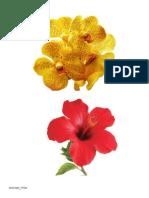 Bunga Raya Dan Bunga Anggerik