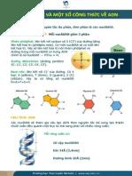 Một số công thức về cấu trúc ADN