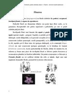 Botanica - pentru studentii anului I - Floarea - descriere morfo-anatomică