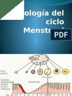 Patologia Del Ciclo Menstrual