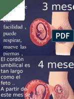 Etapa Prenatal y Perinatal Segunda Parte Hufgu