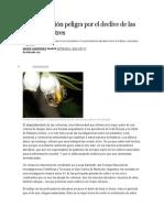La Polinización Peligra Por El Declive de Las Abejas Silvestres