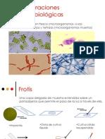 U2j_PreparacionesMicrobiologicas_17194