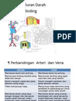 Arteri, Vena & Kapilari