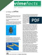 Blowfly Identification