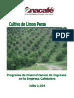 Cultivo de Limón Persa