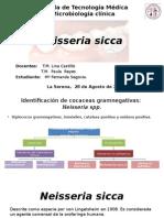 Neisseria Sicca