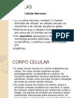 Resumo de Neurofisiologia Da Central Do Aluno