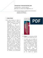 Informe Extraccion Del ADN