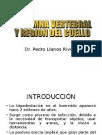 Columna Vertebral y Cuello