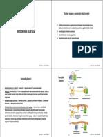 Endokrini+i+imunosni+sustav+2013-14