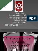 Anatomia de Conductos