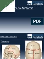 Anatomía de Cráneo DxI