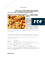 El Aguaymanto Calabaza y Tomate