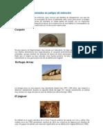 Animales Peligro Extincion