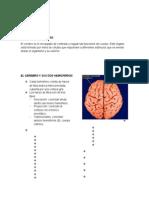 Cerebro Lenguaje (1)
