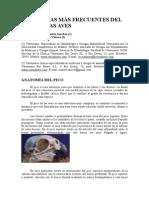 Patologias Mas Frecuentes Pico Aves-2