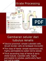 Tubular Reabsorption and Secretion