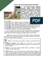 """""""El cuidado de cachorros de Perros Guía"""" 4 EP-Texto expositivo"""