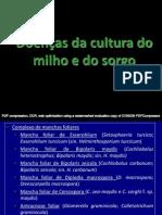 Sorgo e Milho Doencas.pdf